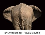 View Of The Rear Of An Elephan...