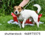 dog washing under water stream...   Shutterstock . vector #468975575