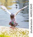 Pigeons Near Water   Birds ...