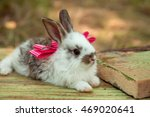 Stock photo cute little bunny rabbit with pink bow on wooden board on natural background 469020641