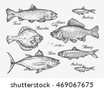 hand drawn fish. sketch trout ... | Shutterstock .eps vector #469067675