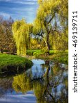 Willow Tree By The Pond With...