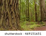 armstrong redwoods state park ... | Shutterstock . vector #469151651