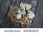 Ripe Seeds Of Lunaria  Malva...