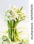 snowdrops  first spring flowers ... | Shutterstock . vector #469349654