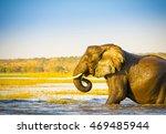 portrait of an adult african... | Shutterstock . vector #469485944