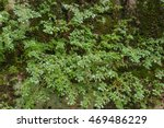 green fern and moss growing on... | Shutterstock . vector #469486229