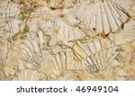 fossilized sea shell imprints... | Shutterstock . vector #46949104