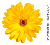 Stock photo yellow isolated flower 469502774