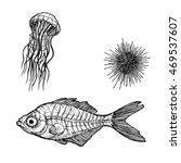 sea life. illustration of... | Shutterstock .eps vector #469537607