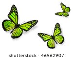 Stock photo green butterflies isolated on white flying towards center of frame 46962907