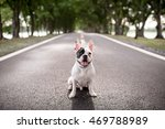 Stock photo french bulldog on blur of road and tunnel tree background 469788989
