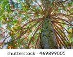 Giant Tree With Bushy Branch I...