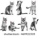 Beautiful Cat Collection...