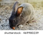 Cute Little Grey Rabbit In A...