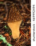 Forest Macro Portrait Of A...