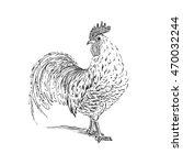 cock sketch. hand drawn vector... | Shutterstock .eps vector #470032244
