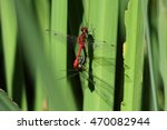 dragonfly on leaves | Shutterstock . vector #470082944
