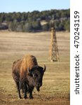 Small photo of American Bison and an old wooden windmill