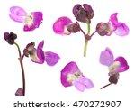 purple bean leaf closeup...   Shutterstock . vector #470272907