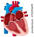 diagram showing inside of human ... | Shutterstock .eps vector #470294699