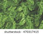 green leaves background. | Shutterstock . vector #470317415