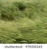 High Wind In A Green Wheat...