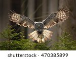 action scene from the forest... | Shutterstock . vector #470385899