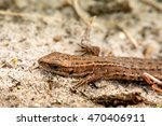 macro shot of a lizard. early... | Shutterstock . vector #470406911