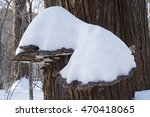 Small photo of Artist's conk fungus (Ganoderma applanatum) covered with snow