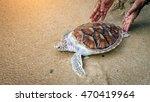 hawks bill sea turtle release... | Shutterstock . vector #470419964