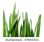 Grass With Rain Drops Isolated...