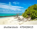 driftwood on a beach  heron... | Shutterstock . vector #470428415