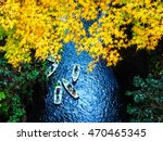 Yellow Leaves In Takachiho...