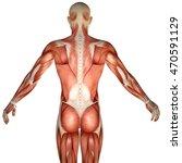 3d Human Anatomy Torso Back...