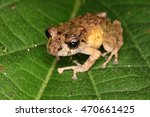 brown tree frog sitting on a...   Shutterstock . vector #470661425