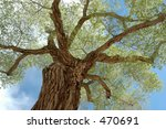 tree | Shutterstock . vector #470691
