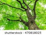 green sapium sebiferum tree... | Shutterstock . vector #470818025