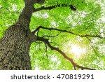green sapium sebiferum tree... | Shutterstock . vector #470819291