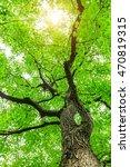 green sapium sebiferum tree... | Shutterstock . vector #470819315