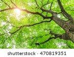 green sapium sebiferum tree... | Shutterstock . vector #470819351