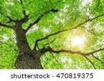 green sapium sebiferum tree... | Shutterstock . vector #470819375