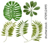 set of tropical leaves painted... | Shutterstock . vector #470912495