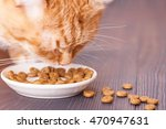 Red Cat Eating Dry Food From A...