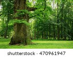 mighty old oak tree on clearing ... | Shutterstock . vector #470961947
