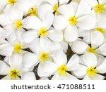 closeup group of white fallen... | Shutterstock . vector #471088511