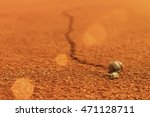 Snail And Snail Trail On Clay....
