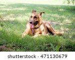 german shepherd on a green... | Shutterstock . vector #471130679