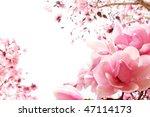 Fresh  Pink  Spring Magnolia...