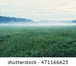 Dreamy Green Meadow With Wild...